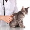 Ветеринарные клиники в Шахунье